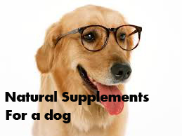 Natural Supplements for a dog